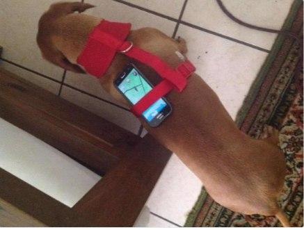 Способ вынашивания яиц при помощи животных Pokemon GO