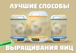 Лучшие быстрые способы выращивания яиц в Pokemon GO